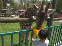 Access to zoo price children in Irapuato 2 hrs
