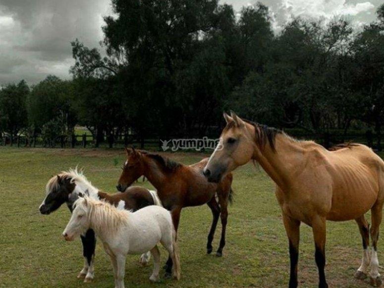 Conoce nuestros hermosos caballos