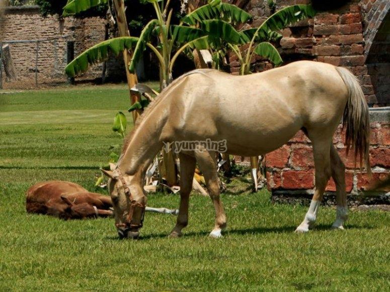 Nuestros caballos descansando despues de un recorrido