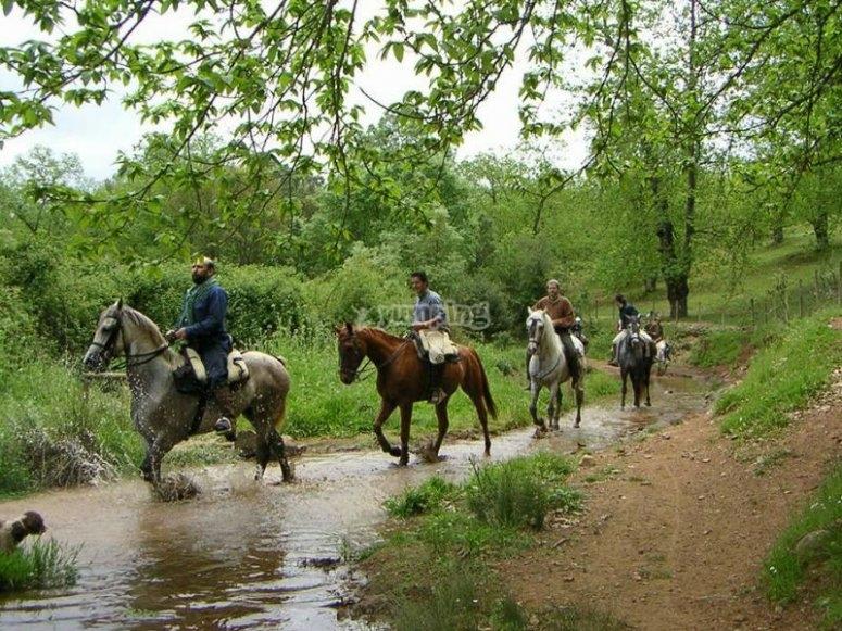Disfruta de un gran paseo a caballo