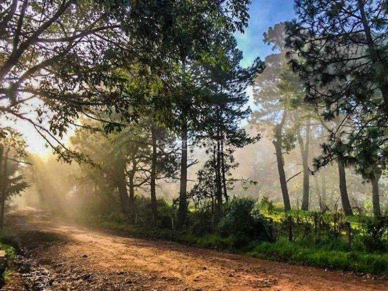 Recorre hermosos senderos