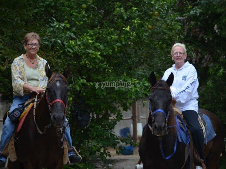 Disfruta de un relajante paseo a caballo