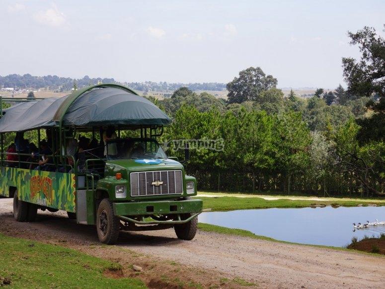 Paseo en camión safari