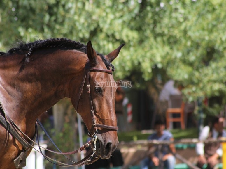 Bellos equinos