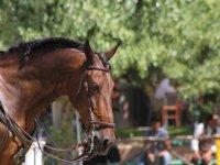 Paseos guiados a caballo