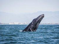 Avistamiento ballenas Bahía de Banderas Niños