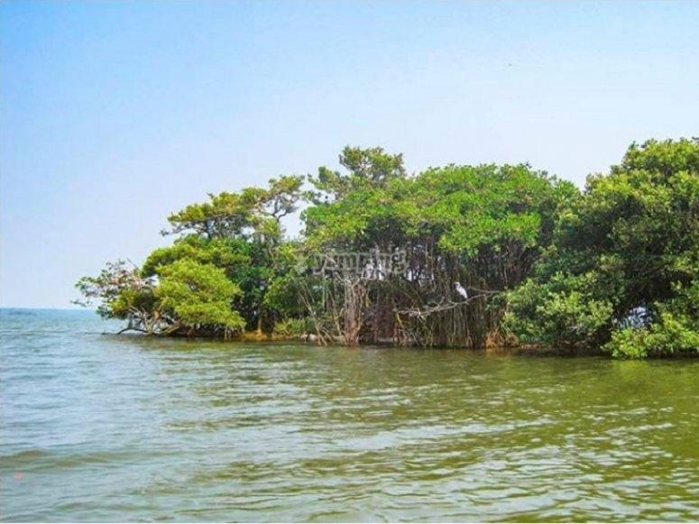 Ride through the Laguna de Mandinga