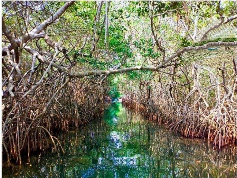 Route through beautiful mangroves