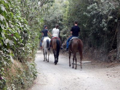 Horseback riding through the trails of Tepoztlán 80 minutes