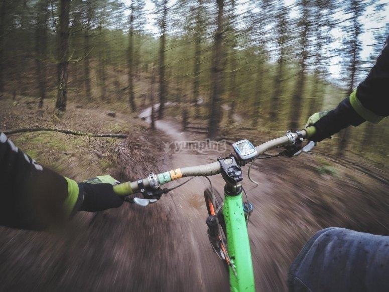 Rutas a través del bosque