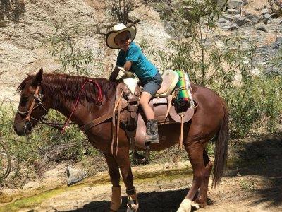 Paseo a Caballo en Los Cabos 4 hrs precio niños
