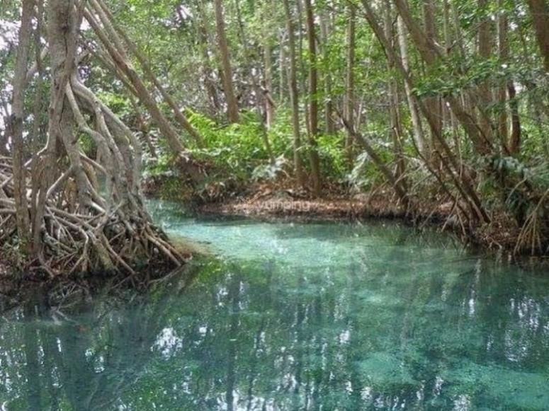Espectaculares manglares en Celestún