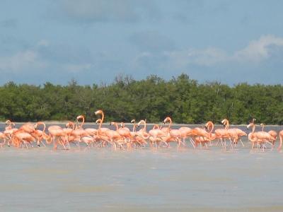 Paseo en lancha por manglares en Celestún 3 hrs