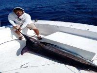 With a sailfish