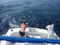 Returning fish to water