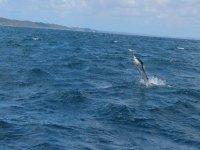 Pescando al pez espada