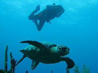 Sian Kite Snorkel