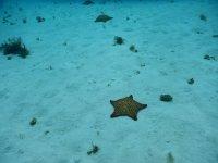 Star de Mar