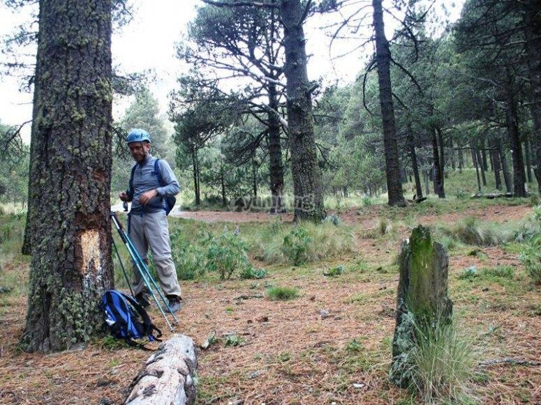 Forêt et sentier