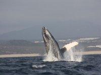 Avistando una ballena