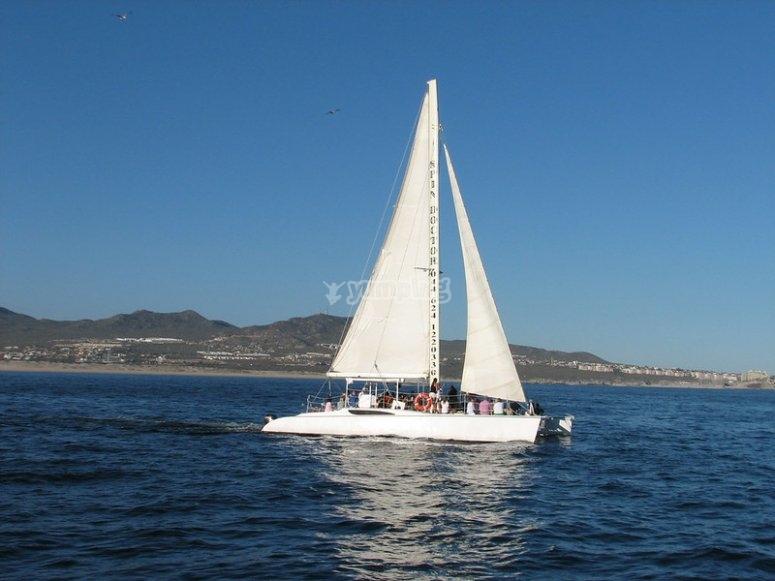 Catamarán hacia la isla