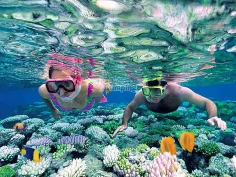 Explorando los corales