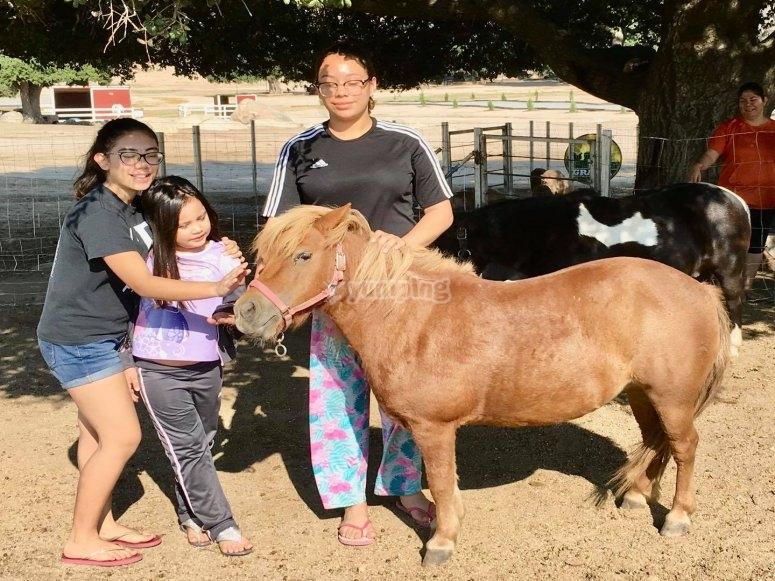 Ponis en Tecate