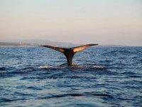 Avistamiento ballenas en Oaxaca
