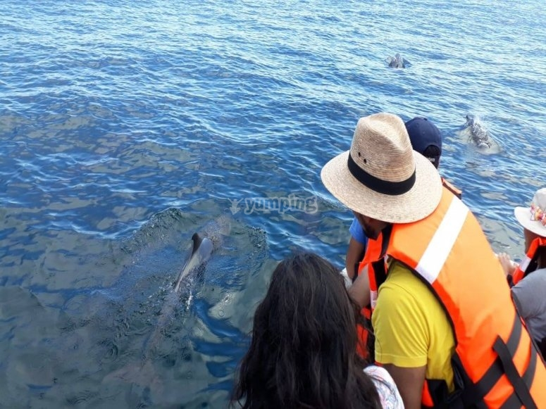 Dolphins in Zicatela