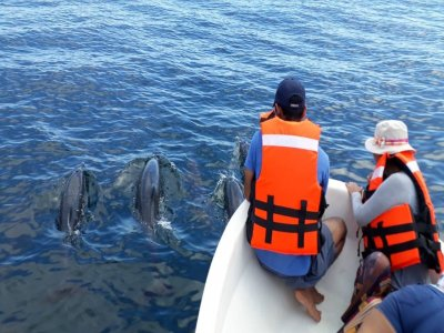 Swim with dolphins private boat in Pto Angelito