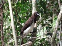 El ave negra maya