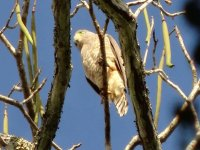 Otro tipo de ave