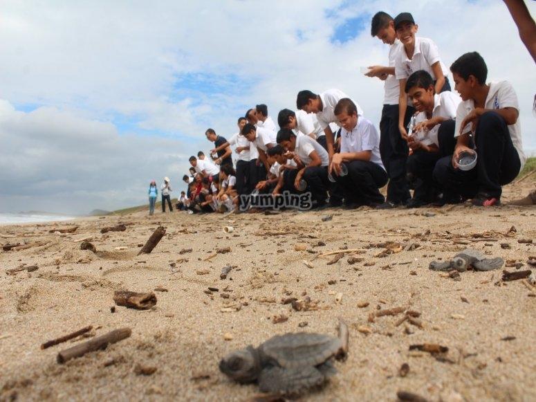 Libera a las crías de tortuga marina.