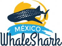 Mexico Whale Shark Tours Buceo