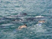 Haz snorkel acompañado