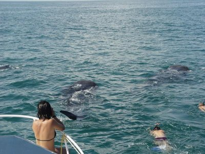 Mexico Whale Shark Tours Whale Watching
