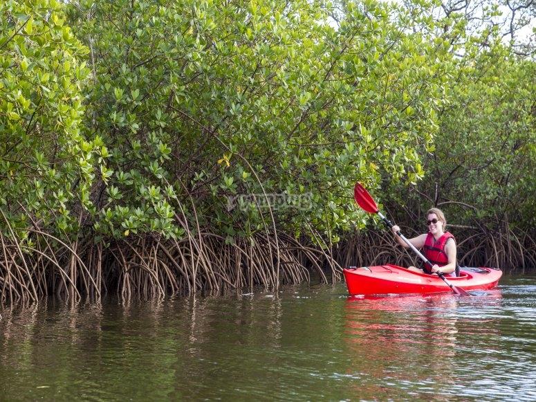 Kayaking entre manglares
