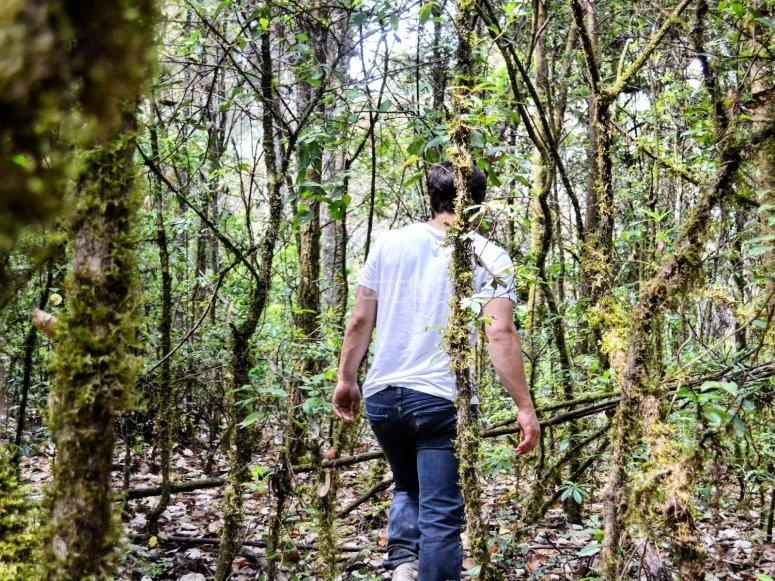Recorre el Bosque de Valle de bravo