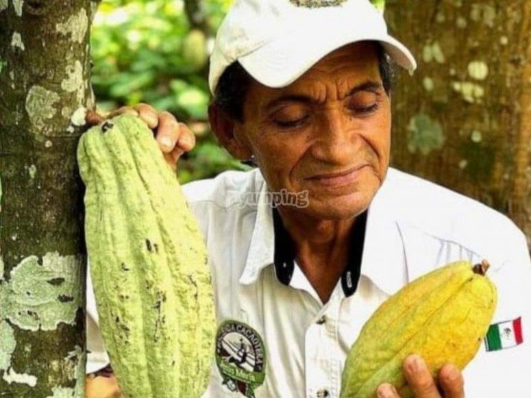 Conociendo al cacao