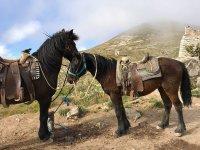 Paseo a caballo hacia el cerro