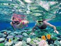 Exploring Corals