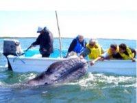 Tocando una ballena