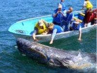 Tour para ver una ballena