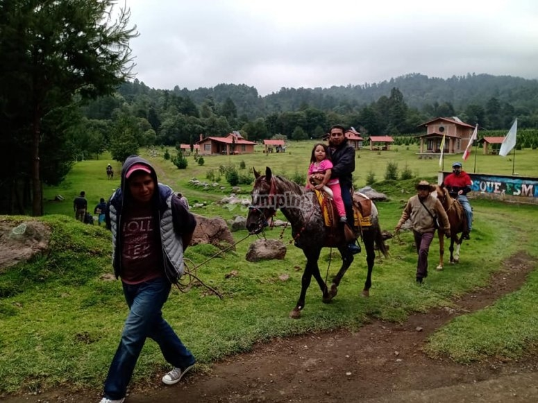 Horseback riding in the forest