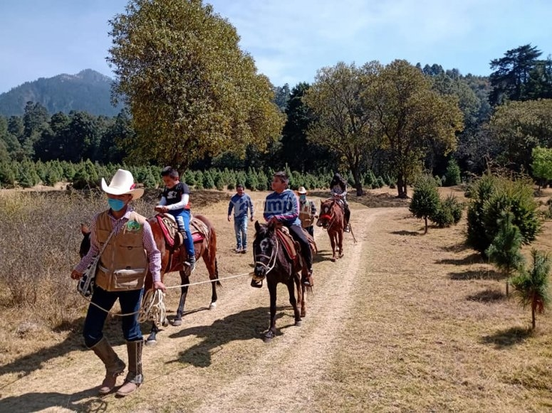 Guided route with horses