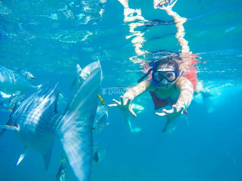 Practica snorkeling en Puerto Vallarta