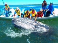avistamiento de ballenas en baja