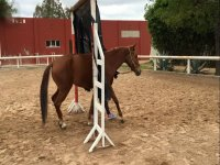 Caballos amables