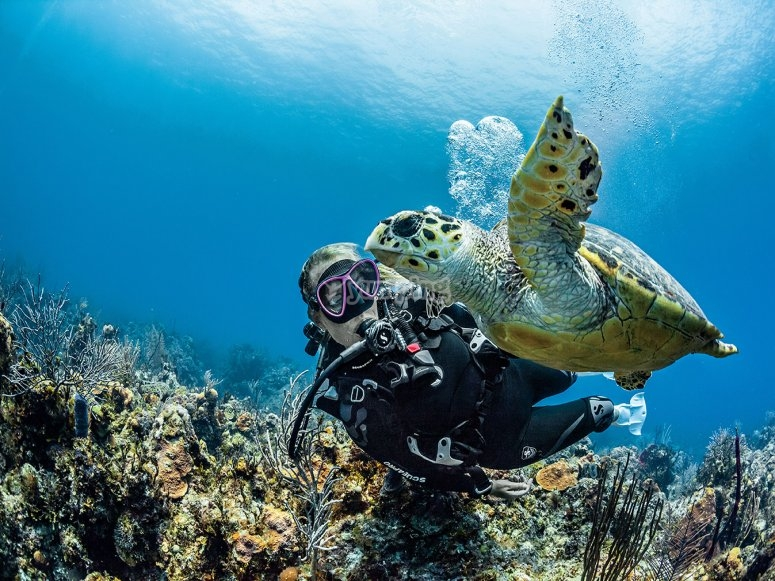Buceando junto a una tortuga