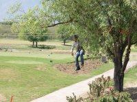 Zipline in trees